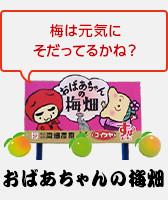 おばあちゃんの梅畑01